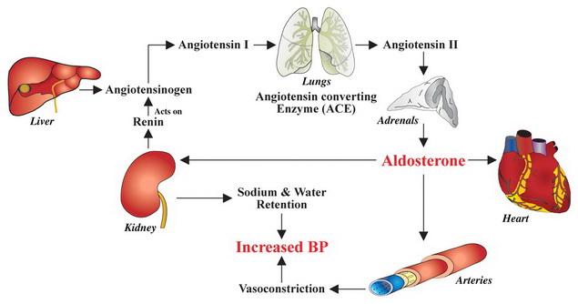 magas vérnyomás szívkárosodás