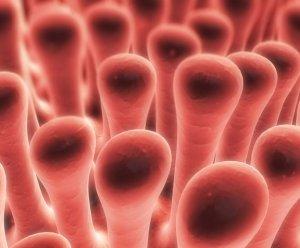 Szimpatika – Vérnyomáscsökkentés természetes módon