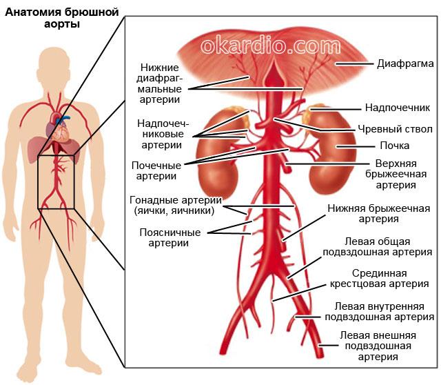 hogyan lehet megszabadulni a magas vérnyomással járó hányingertől)