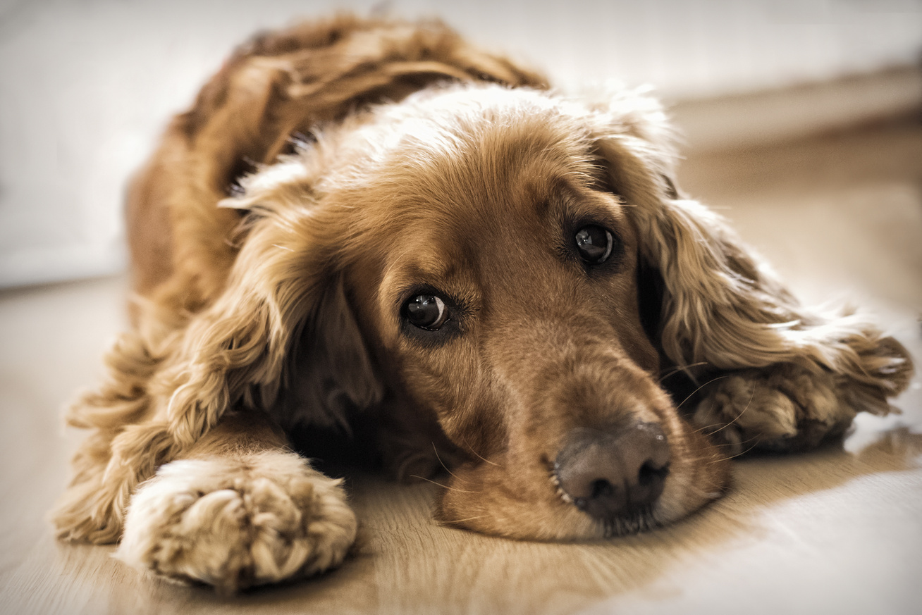 a magas vérnyomás tünetei egy kutyánál