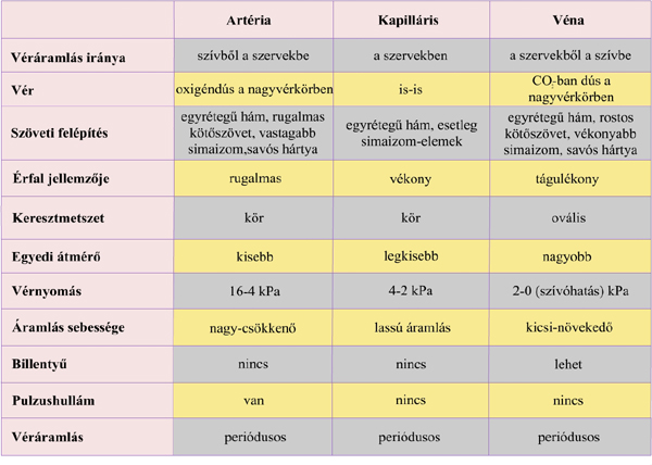 magas vérnyomás vastag vér)