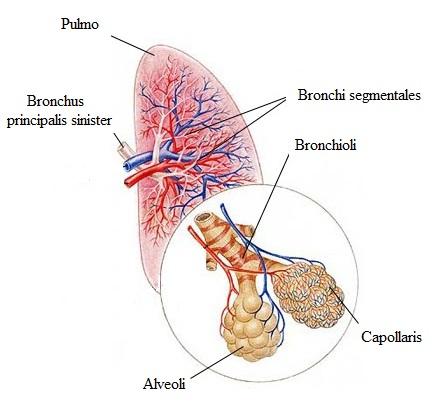 hypertoniás tüdő
