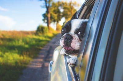 a magas vérnyomásból származó kutyafa