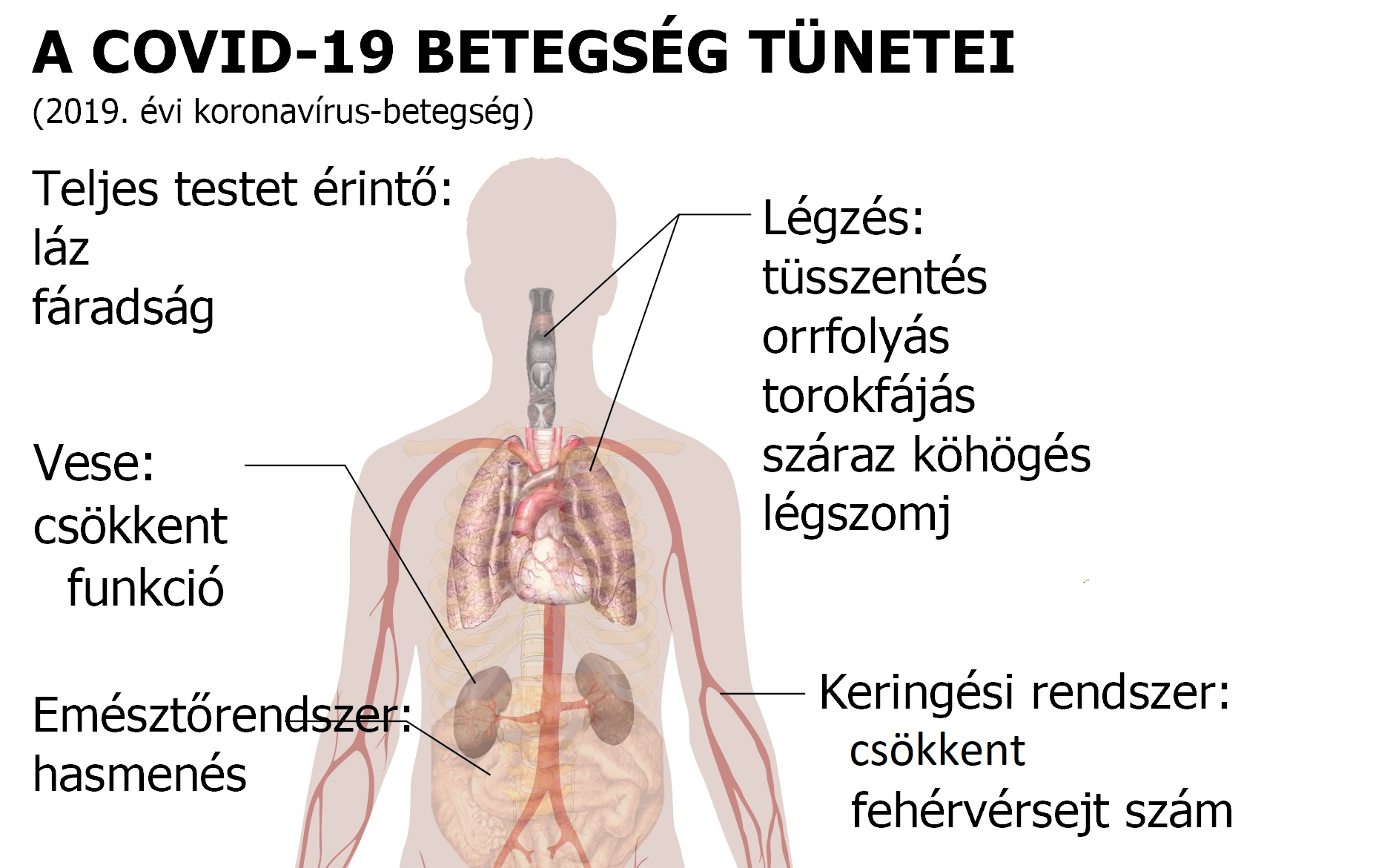 a magas vérnyomás betegségének fő jelei