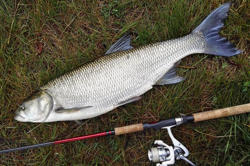 lehetséges-e sózott halat enni magas vérnyomásban)