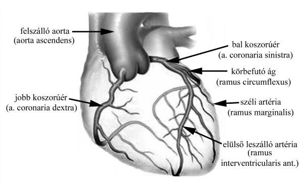 a magas vérnyomás pszichoszomatikus hogyan lehet csökkenteni a vérnyomást magas vérnyomás népi gyógymódokkal