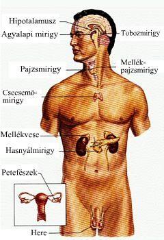 magas vérnyomás és feokromocitóma)