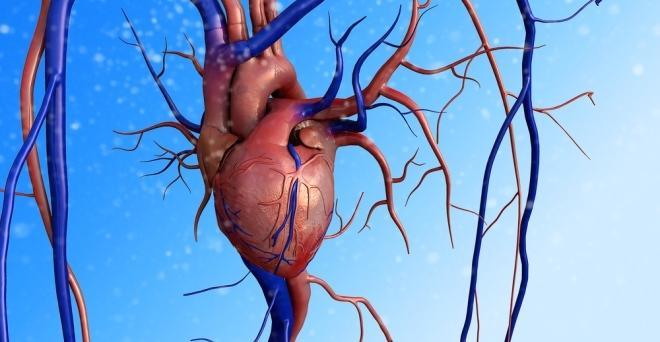 Idegek kiiktatásával csökkenthető a magas vérnyomás