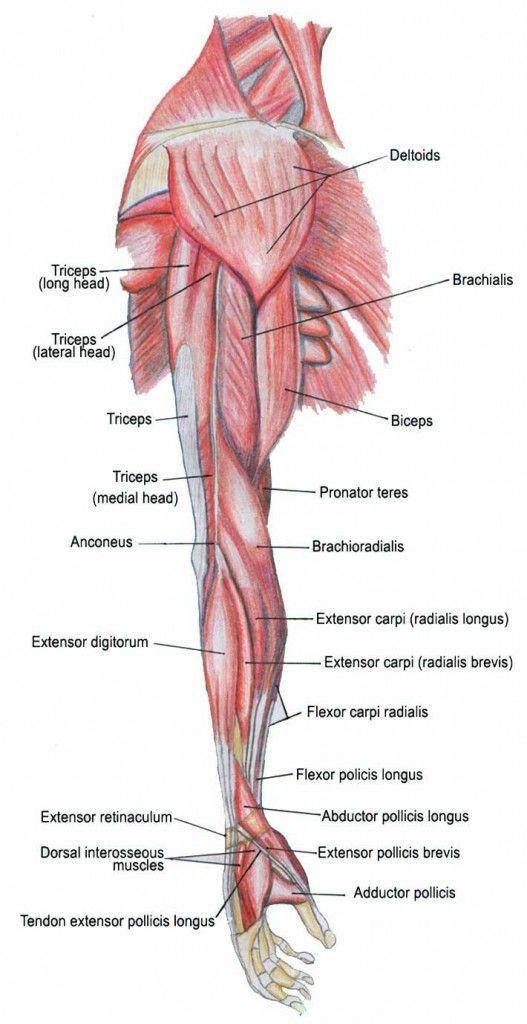 mi a hipertónia az anatómiában)