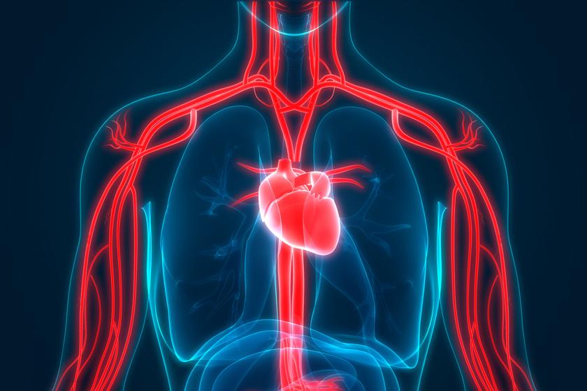 magas vérnyomás és hát