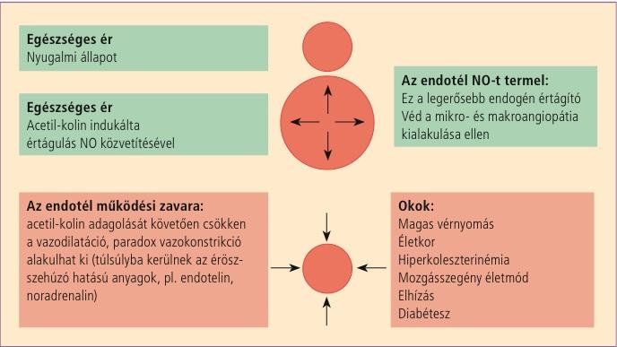 a magas vérnyomás kialakulása)