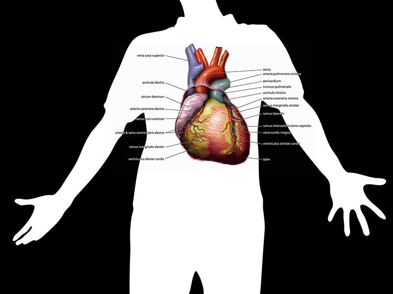 Milyen betegség a kisvérköri magas vérnyomás? - EgészségKalauz
