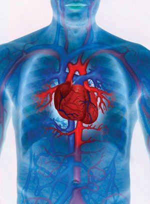 helyreállítsa az ereket magas vérnyomás esetén