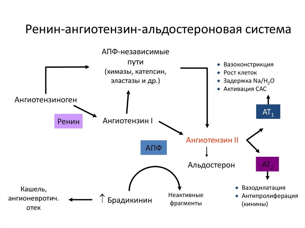 magas vérnyomásszint diagram