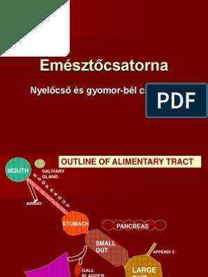 magas vérnyomás myometrium