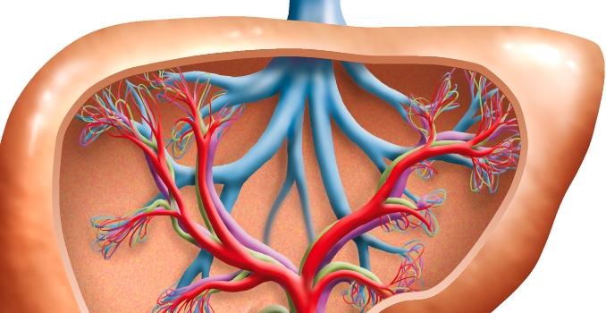 A máj cirrózisa: az ICD 10 kódja és a csoportok