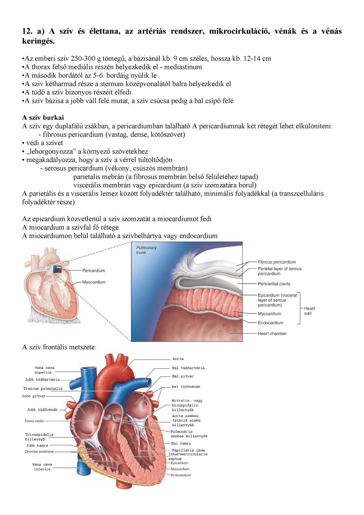 artériás vér az emberi szívben az)