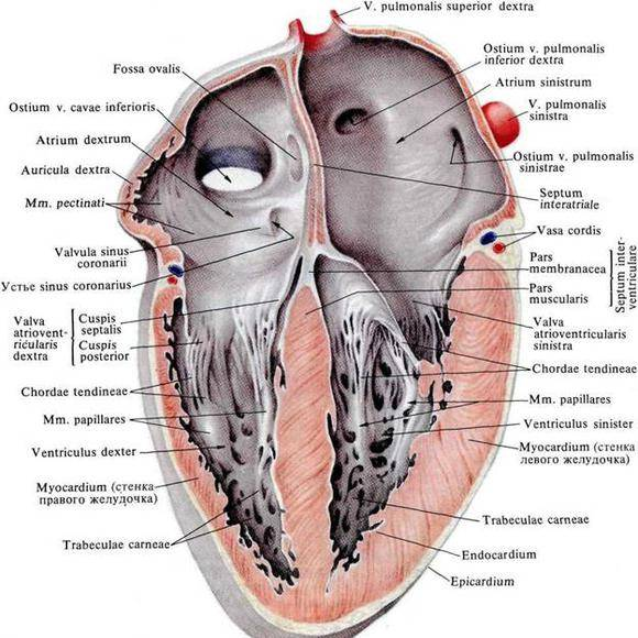 a szív megnagyobbodása magas vérnyomással
