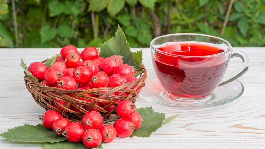 magas vérnyomás és szívelégtelenség kezelésére szolgáló gyógyszerek)