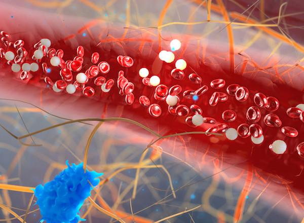 rakocziregiseg.hu - globális gyógyászati online katalógus