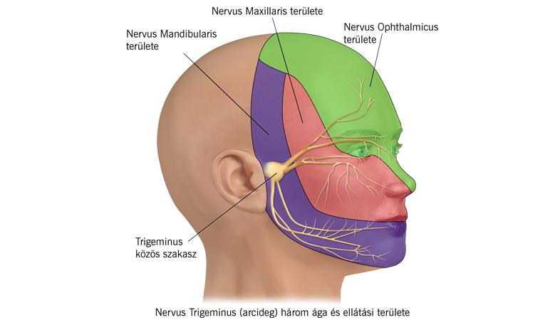 pajzsmirigy hipertónia