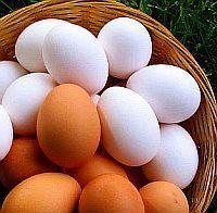 tojásfehérje magas vérnyomás ellen